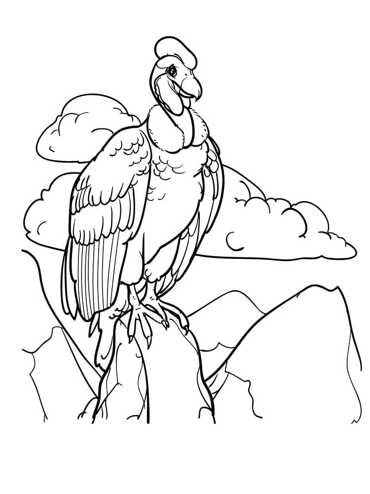 750x1000 Vulture Coloring Pages Vultures Birds Coloring Pages King