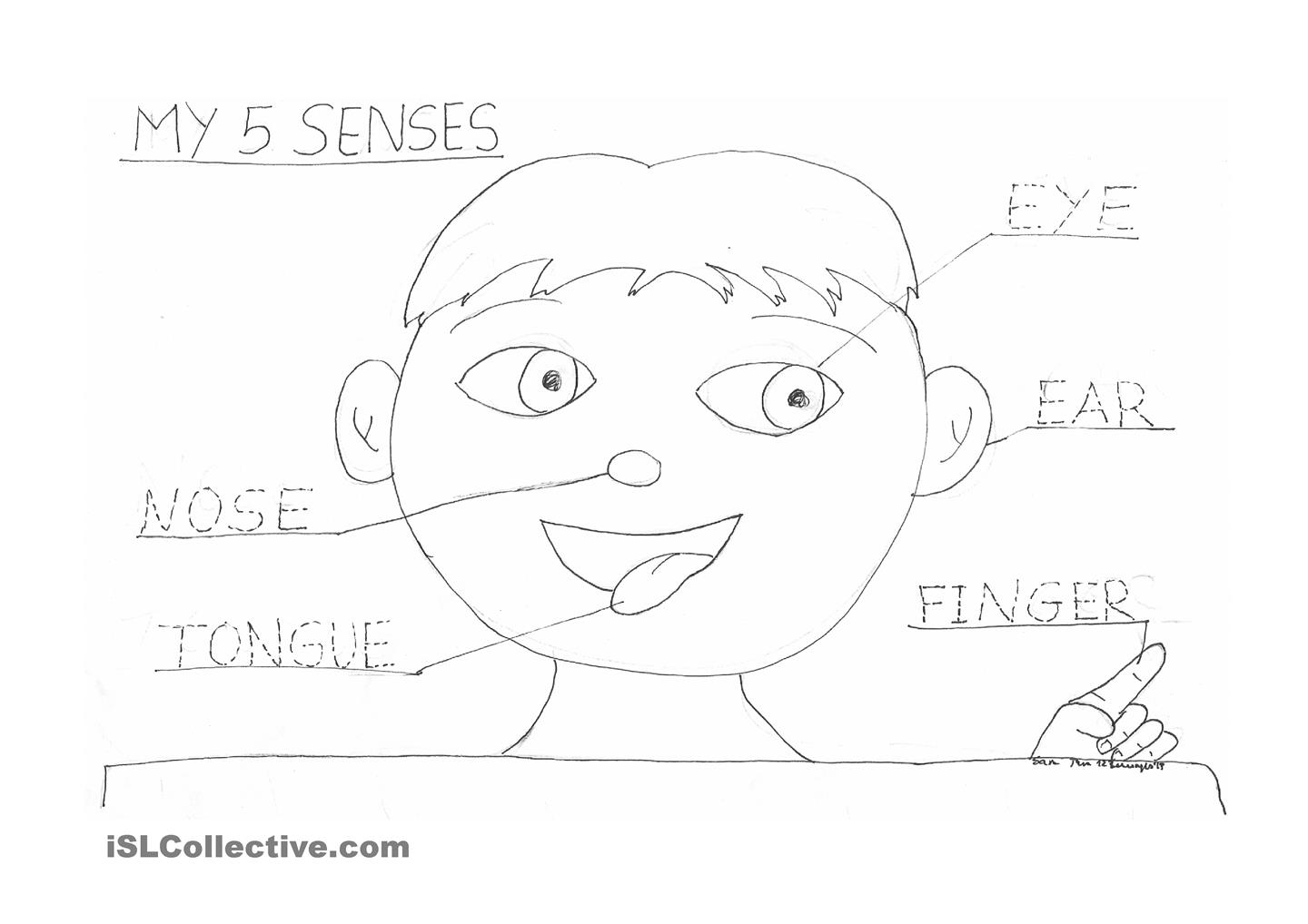5 Senses Coloring Pages At Getdrawings Com Free For Personal Use 5