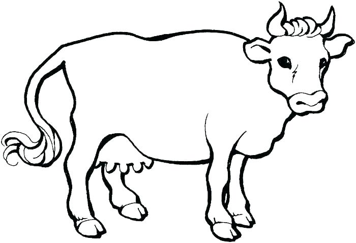 700x478 Cow Coloring Pages Cow Coloring Pages Pretty Cow Coloring Pages