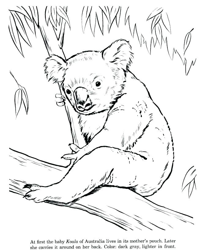 670x820 Printable Pictures Of Zoo Animals Coloring Pages Zoo Animals Zoo