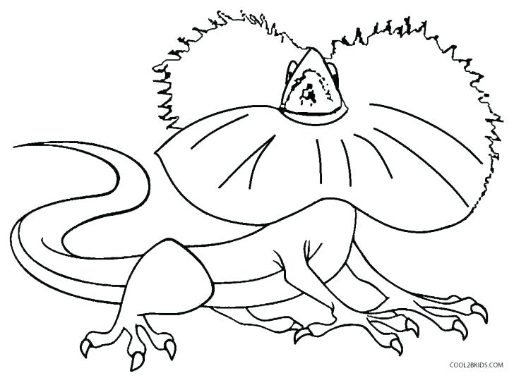 728x536 Alphabet Animal Coloring Pages Animal Alphabet Coloring Pages