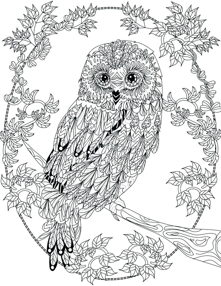 736x952 Marvellous Coloring Pages Owls Owl Coloring Pages Owl Abstract