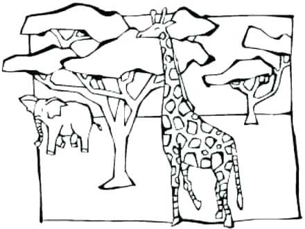 440x330 Acacia Tree Coloring Page Acacia Tree Silhouette Coloring Pages