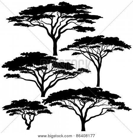 450x470 Set Of Editable Vector Silhouettes Of Acacia Trees Acacia