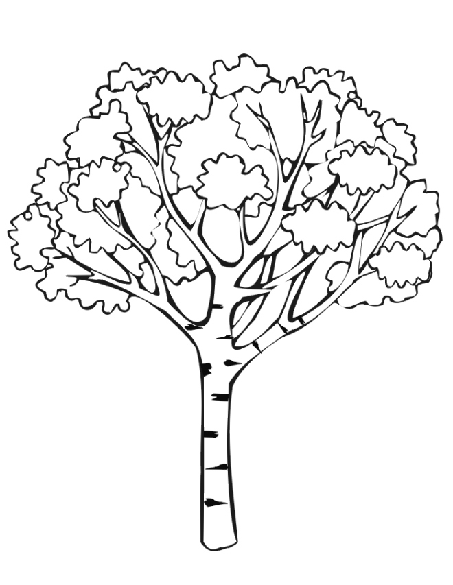 660x853 Tree Coloring Pages Fresh Free Coloring Pages Of Tree Roots Logo