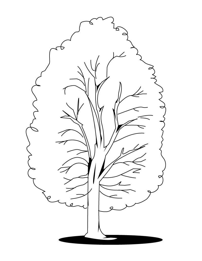 820x1060 Tree Coloring Pages New Acacia Tree Coloring Page Coloring Pages