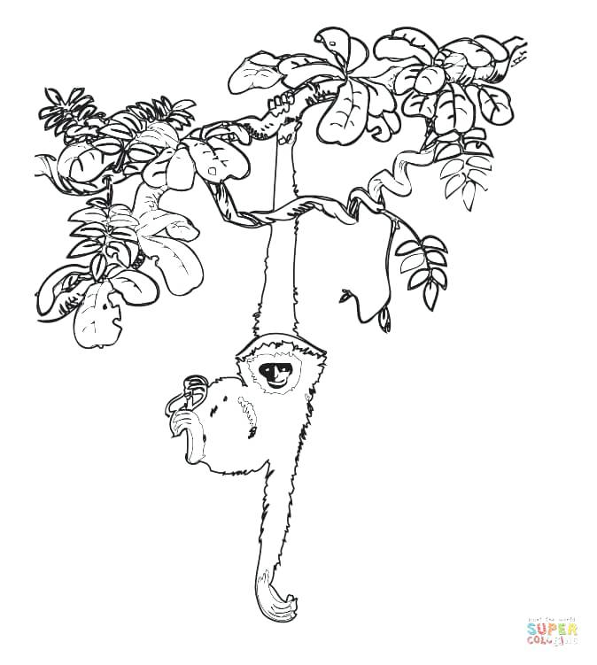 674x751 Tree Drawing At Free For Personal Use Acacia Tree Coloring Page