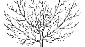 355x200 Acacia Tree Coloring Pages To Print Coloring For Kids