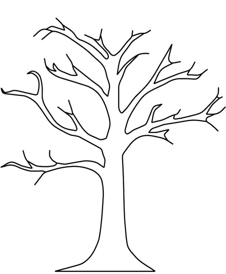 728x885 Apple Tree Coloring Page With Wallpapers Acacia Tree Coloring Page