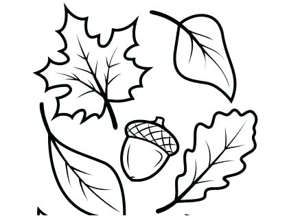 437x315 Acorn Coloring Pages Coloring Pages Of Fall Leaves Fall Leaves