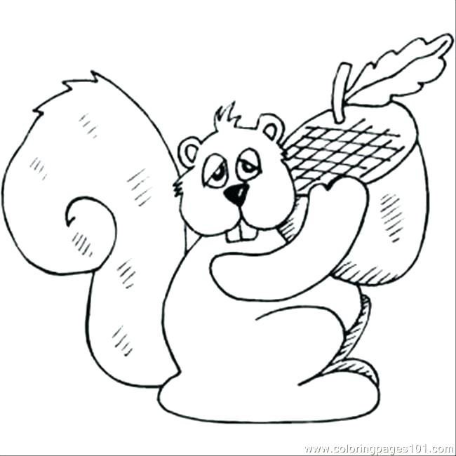 650x650 Flying Squirrel Coloring Page Coloring Pages Squirrel Squirrel