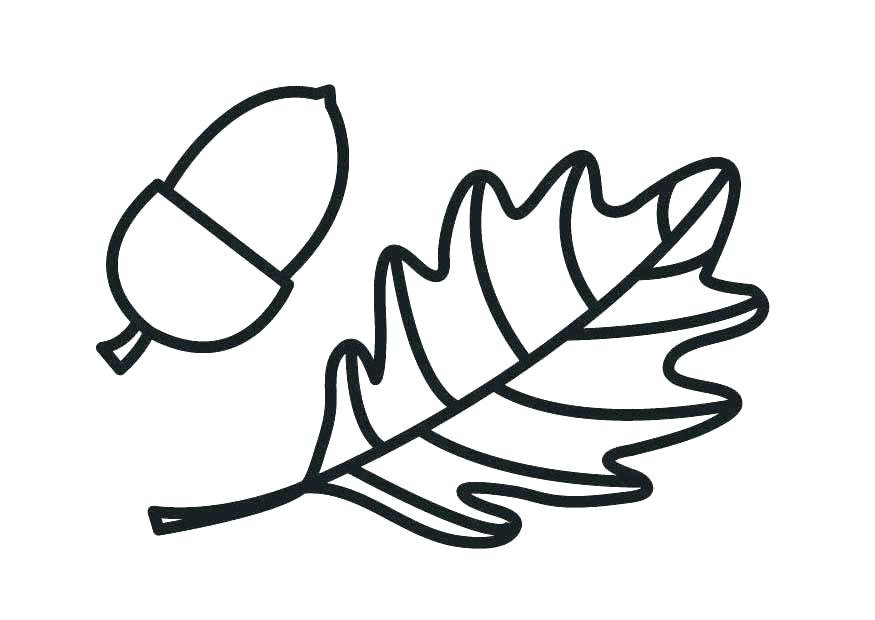 875x620 Squash Coloring Page Acorn Coloring Page Acorn Pictures To Color