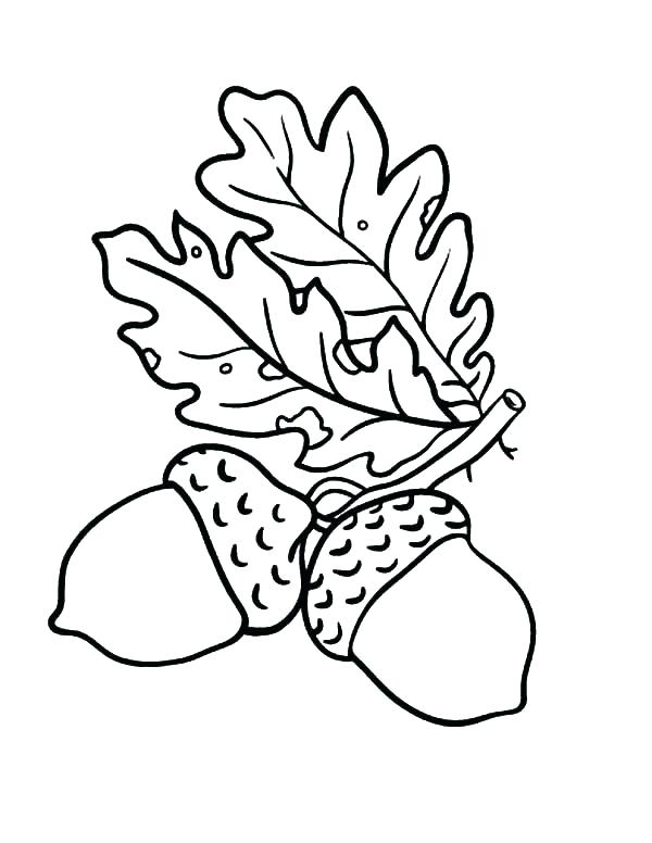 600x776 Acorn Coloring Pages Free Leaf Coloring Pages Free Printable