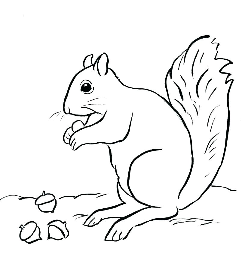 805x912 Acorn Coloring Page Acorn Coloring Pages Coloring Pages Leaves