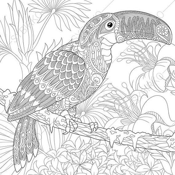 570x570 Adult Coloring Pages Toucan Zentangle Doodle Coloring Pages