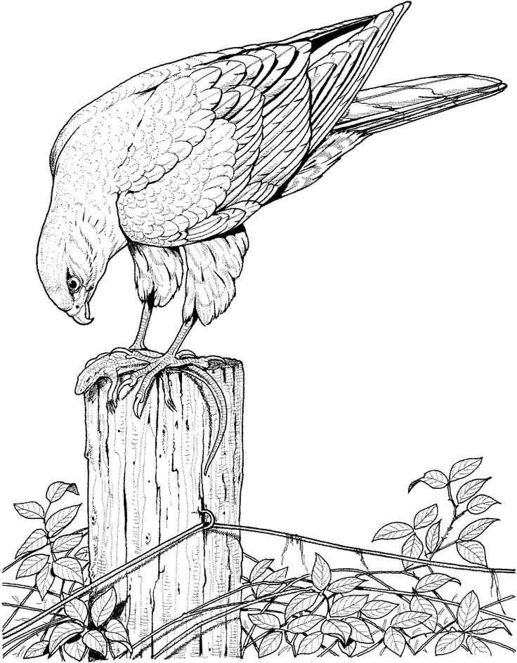 736x944 Bird Coloring Pages For Adults Best Bird Coloring Pages Ideas