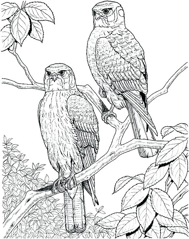 616x780 Coloring Page Bird Coloring Pages Bird Adult Coloring Pages Bird
