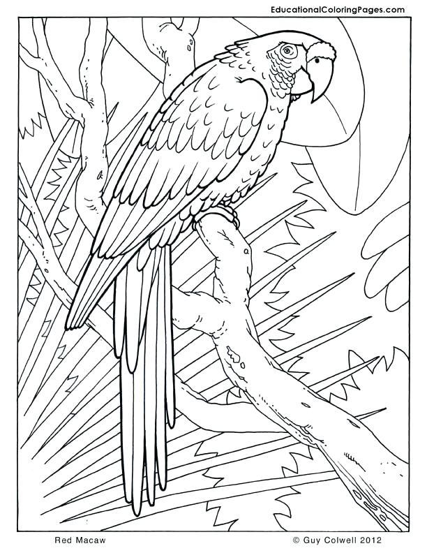 612x792 Coloring Pages Bird Of Paradise Adult Coloring Pages Birds Flowers
