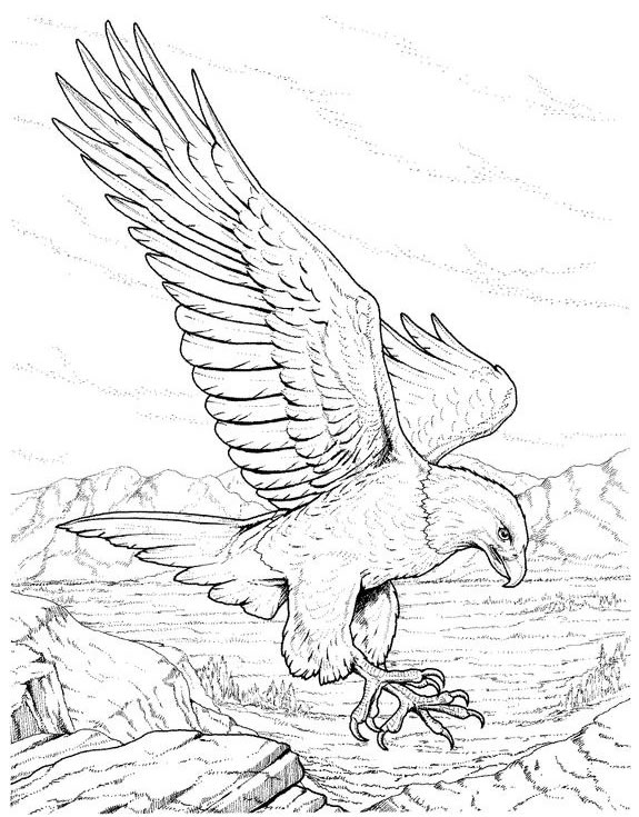 575x735 Eagle Coloring Pages