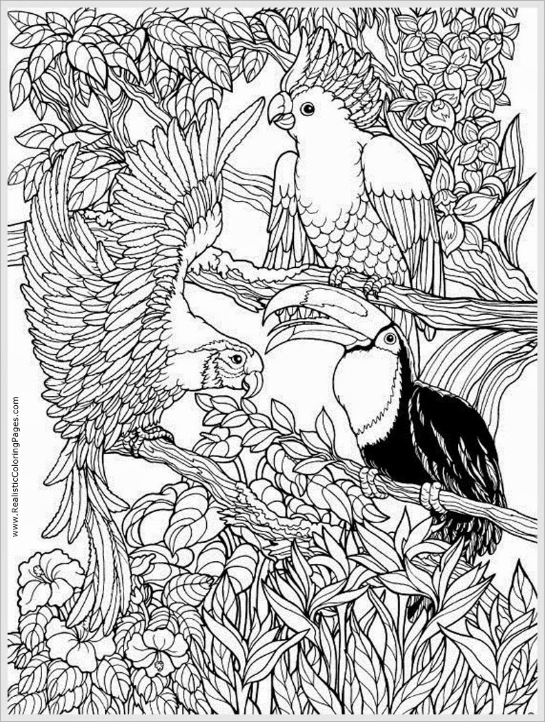 790x1046 Free Adult Coloring Pages Birds Free Coloring Sheets