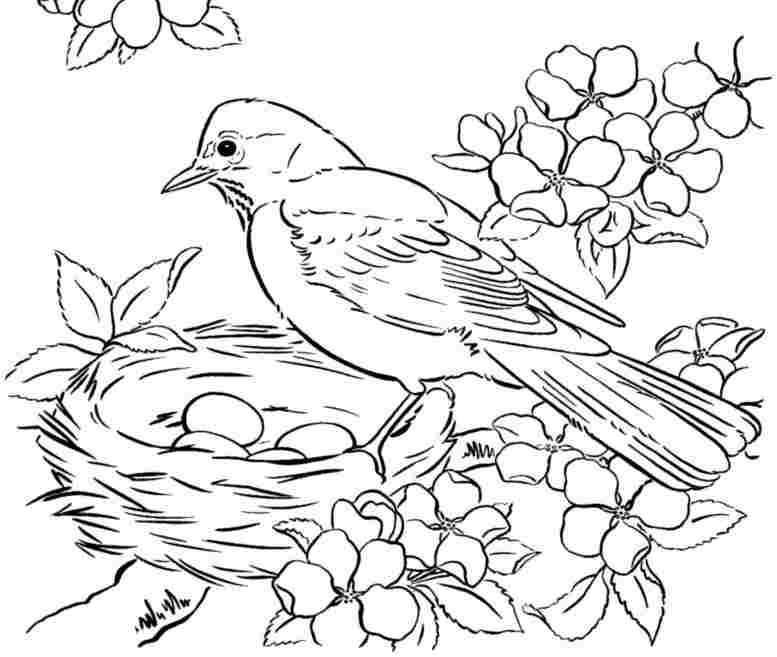 777x657 Free Printable Adult Coloring Pages Birds
