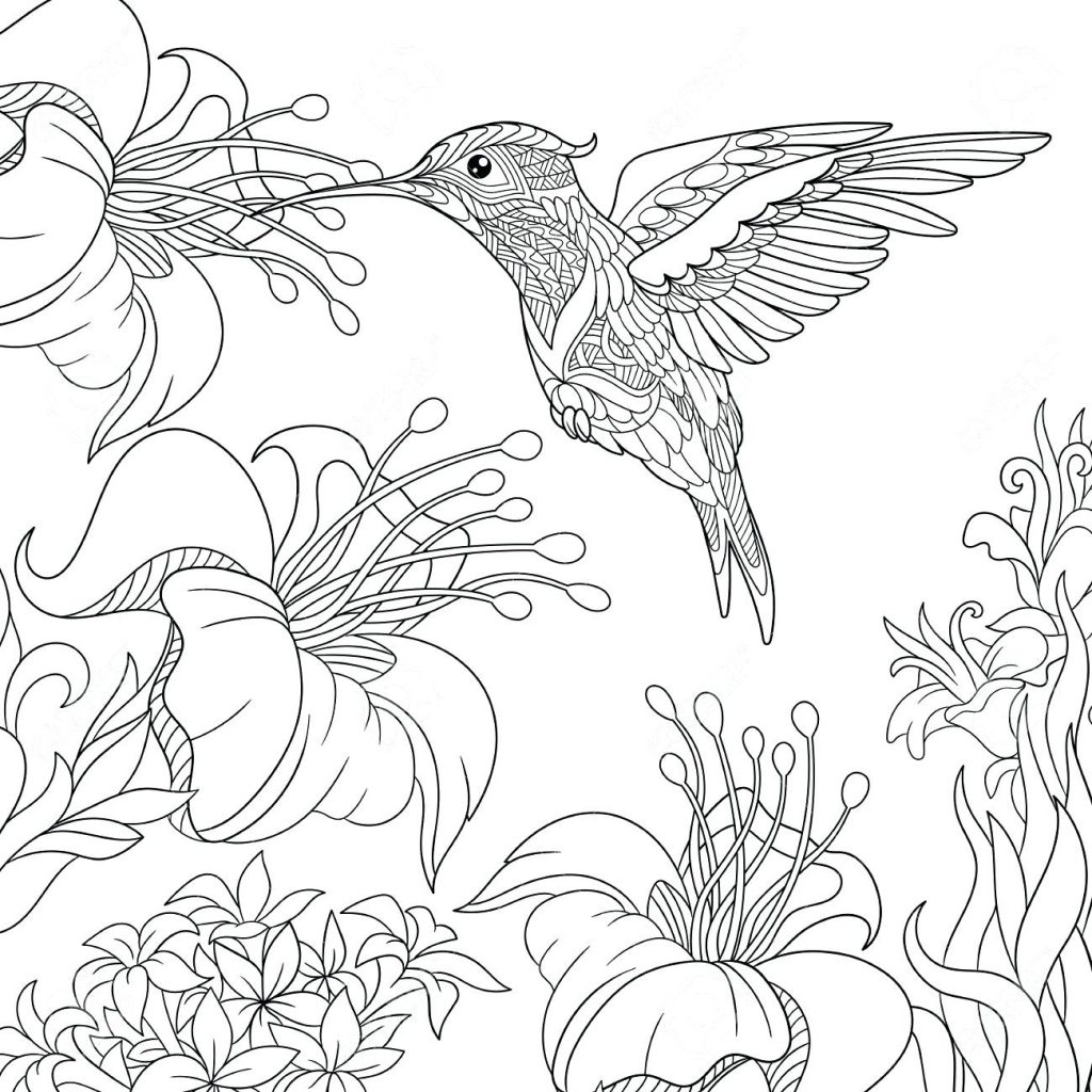 1024x1024 Coloring Pages Hummingbird Coloring Pages Calliope Birds