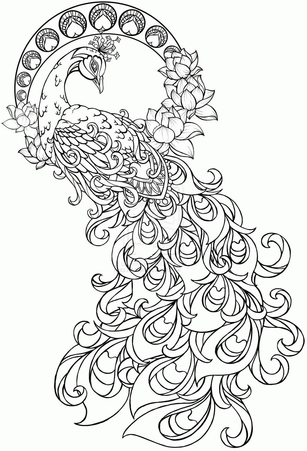 1024x1505 Unique Peacock Page To Color Collection Printable Coloring Sheet