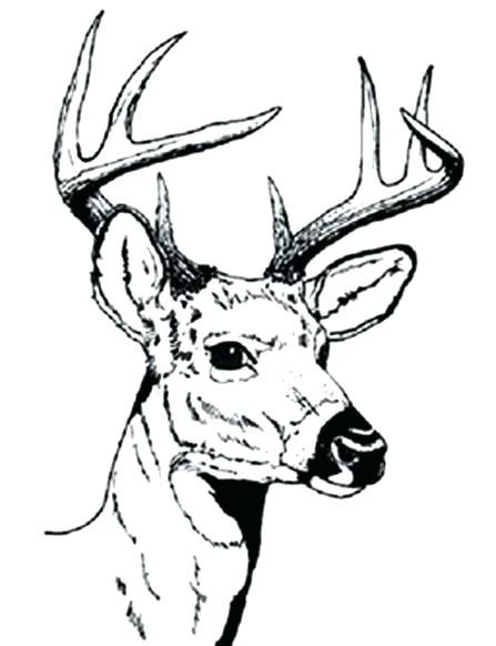 447x582 Deer Hunting Coloring Pages Deer Color Pages Free Deer Coloring