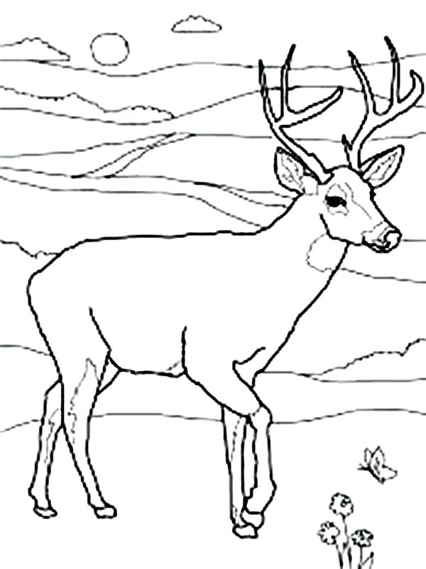 600x801 Free Deer Coloring Pages Adult Coloring Pages Deer Free Free Deer