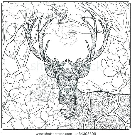 450x470 Coloring Pages Deer Deer Color Pages Deer Coloring Page Free