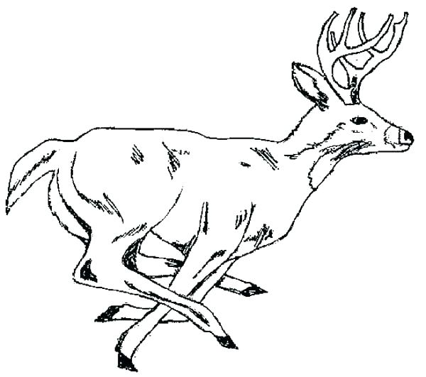 600x531 Coloring Pages Deer Pen And Watercolor Adult Coloring Instant