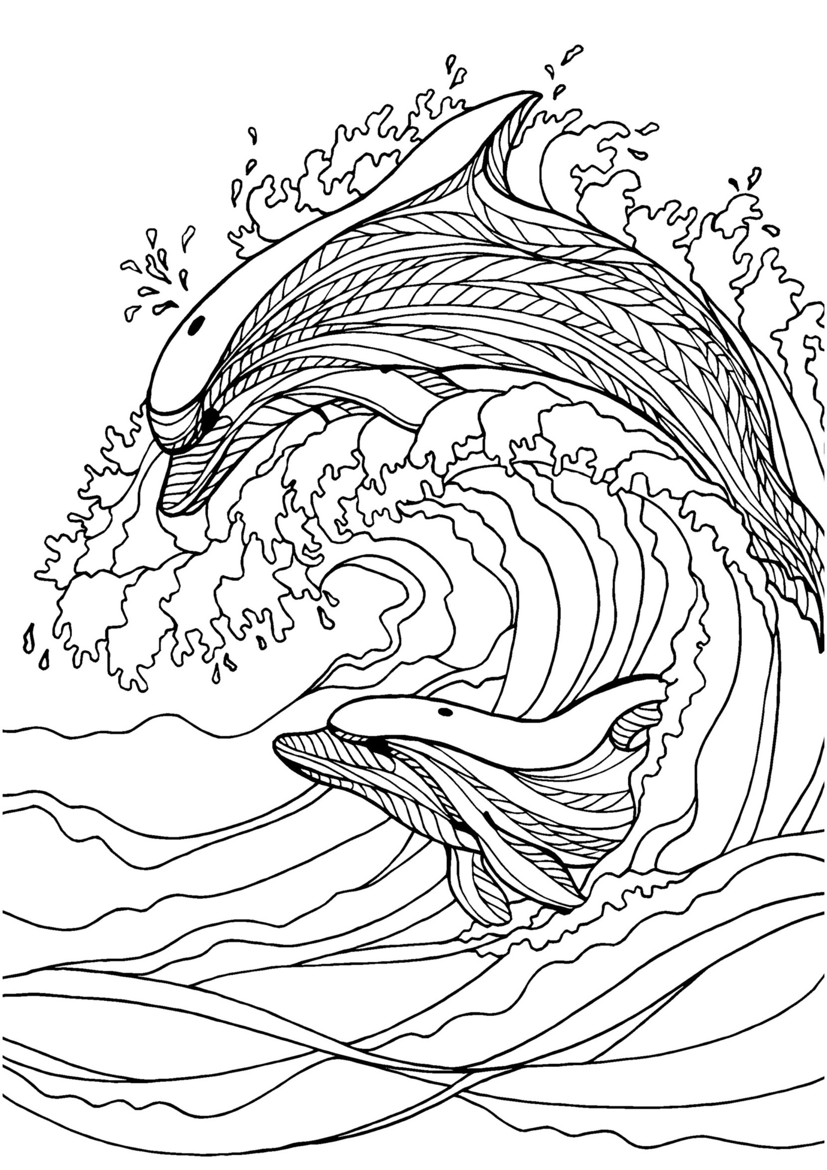 Adult Coloring Pages Dolphin at GetDrawings | Free download