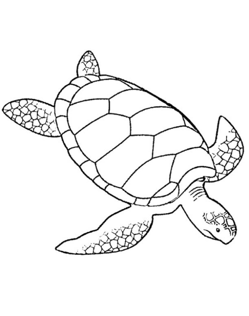 806x1024 Turtles Coloring Pages For Adults Printable Kids Colouring Pages