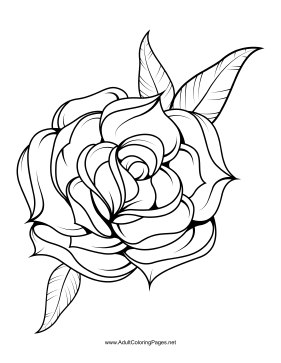 281x363 Unfold Coloring Page