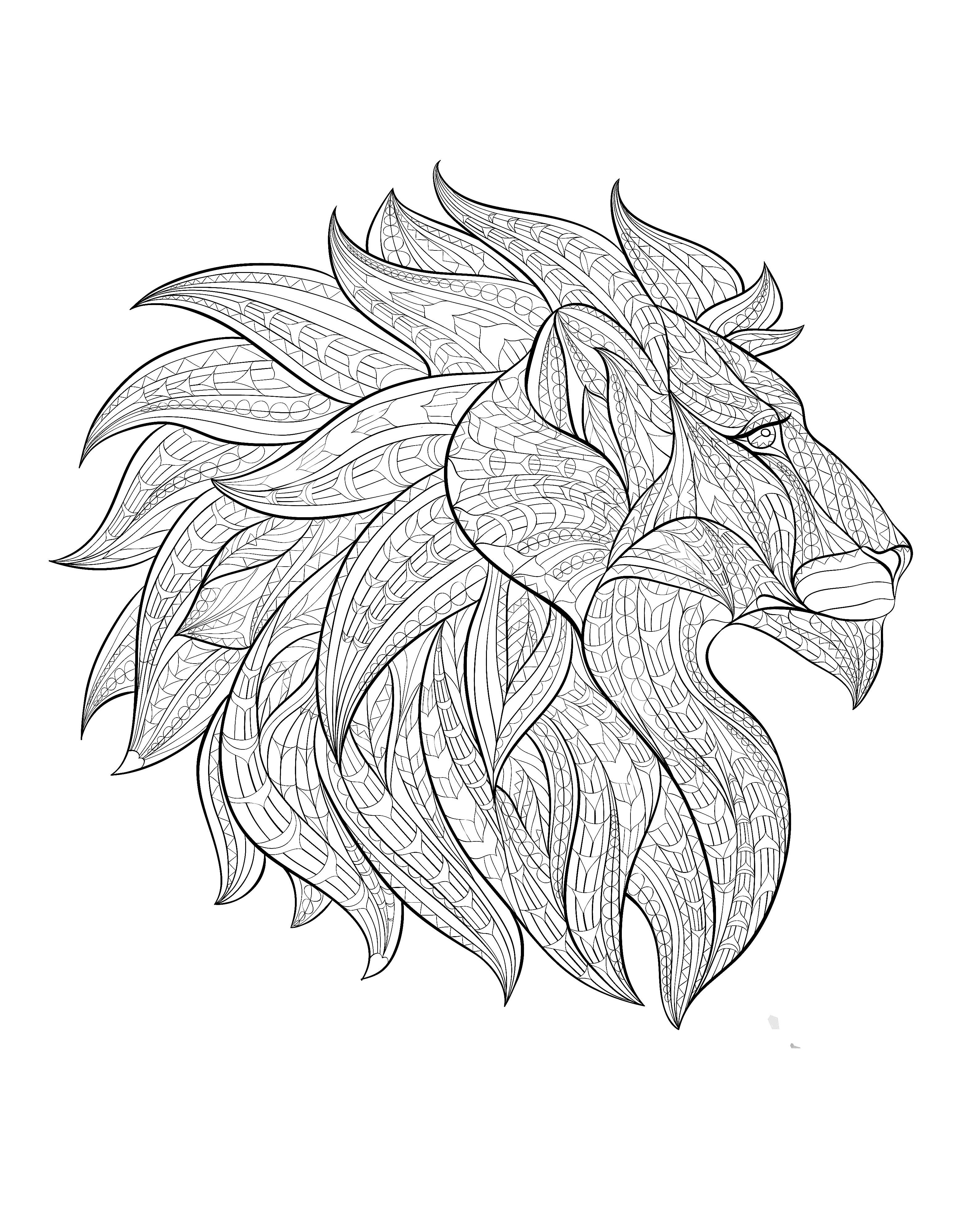 3174x3909 Africa Lion Head Profile