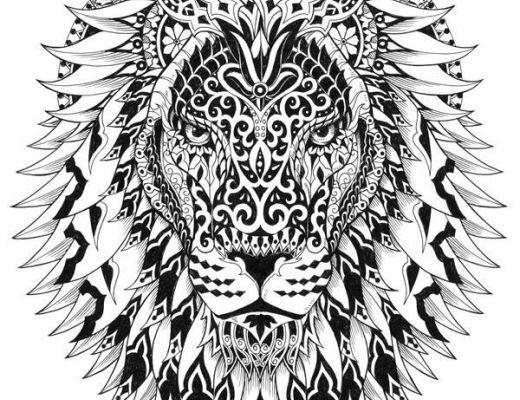 520x400 Adult Coloring Pages Lion
