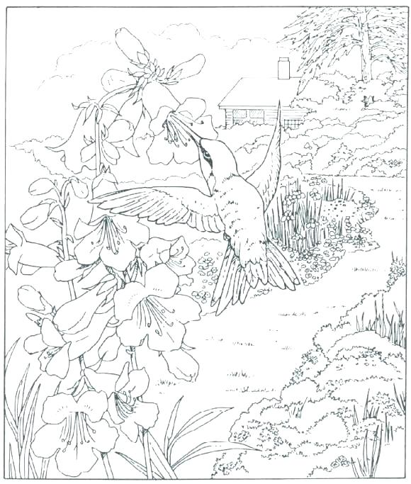 580x683 Free Nature Coloring Pages Coloring Pages For Adults Nature Nature