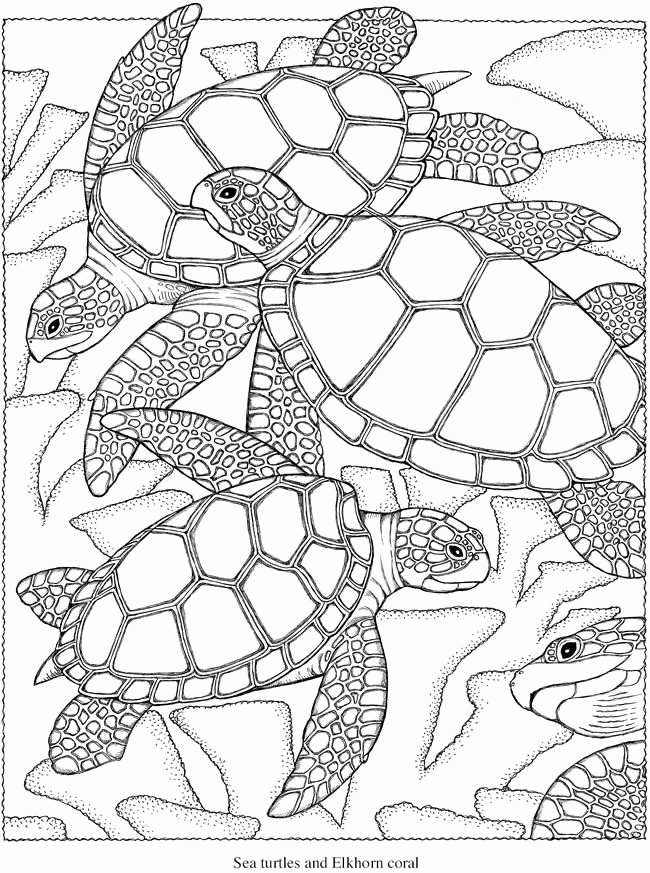 650x873 Adult Coloring Pages Turtle Many Interesting Cliparts Ocean
