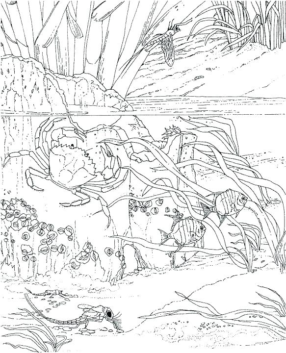 583x720 Free Ocean Scene Coloring Pages Kids Coloring Ocean Scene Coloring