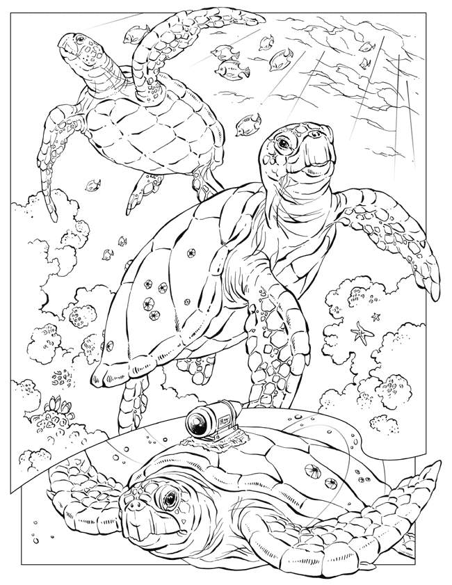 650x841 Ocean Coloring Pages For Adults Adult Page Sea Turtle