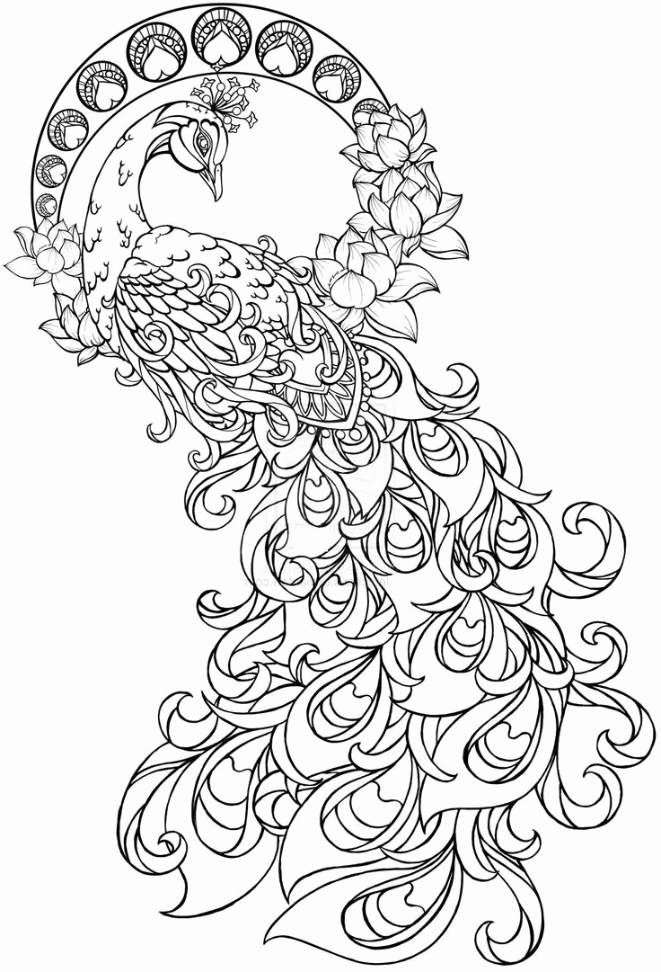 736x1081 Coloring Book Best Peacock Adult Pages Free Printable Printable
