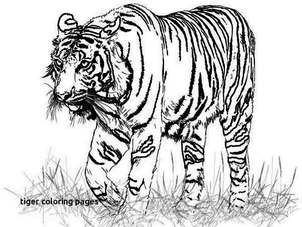 Adult Coloring Pages Tiger