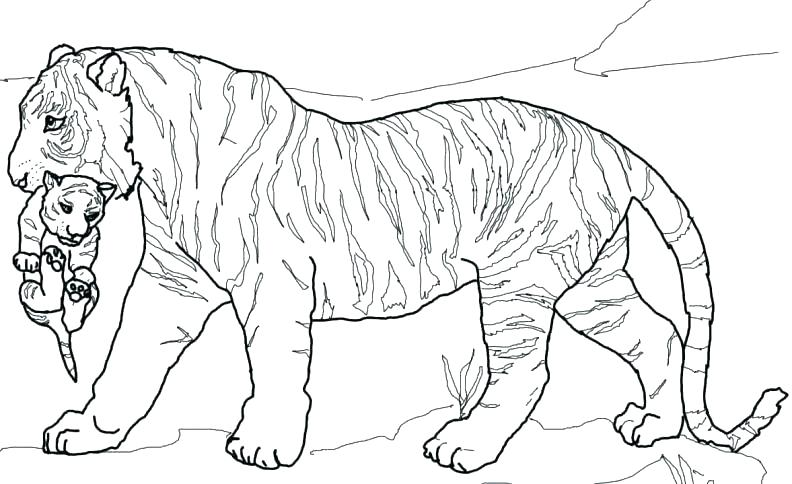 Adult Coloring Pages Tiger at GetDrawings.com | Free for ...