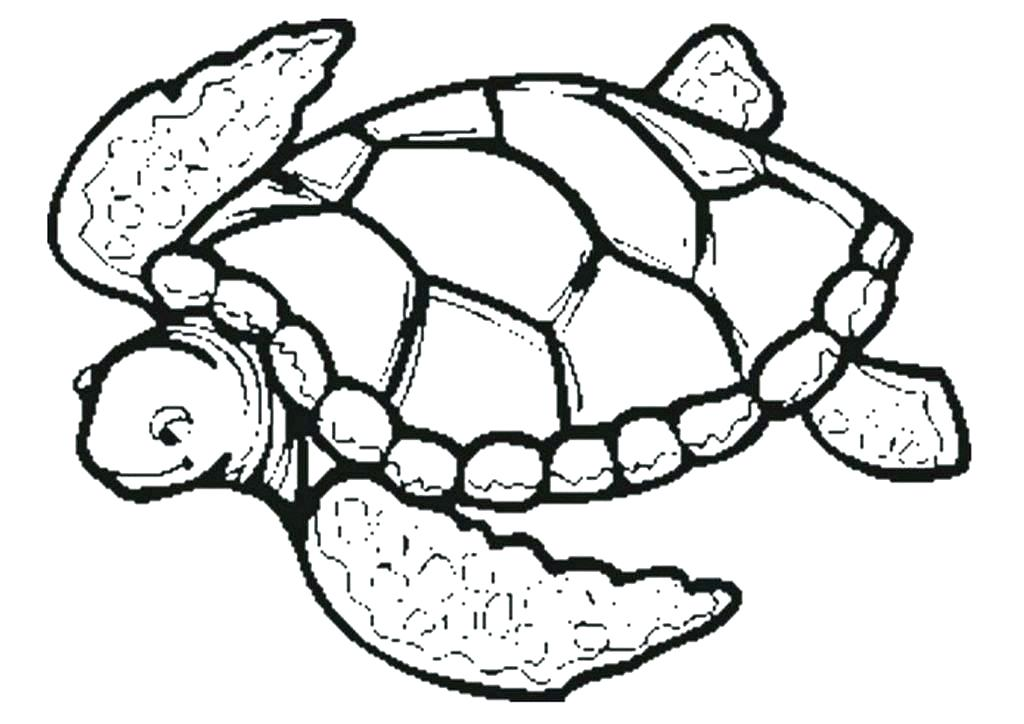 1024x724 Coloring Page Turtle Sea Turtle Bubble Free Coloring Page Free