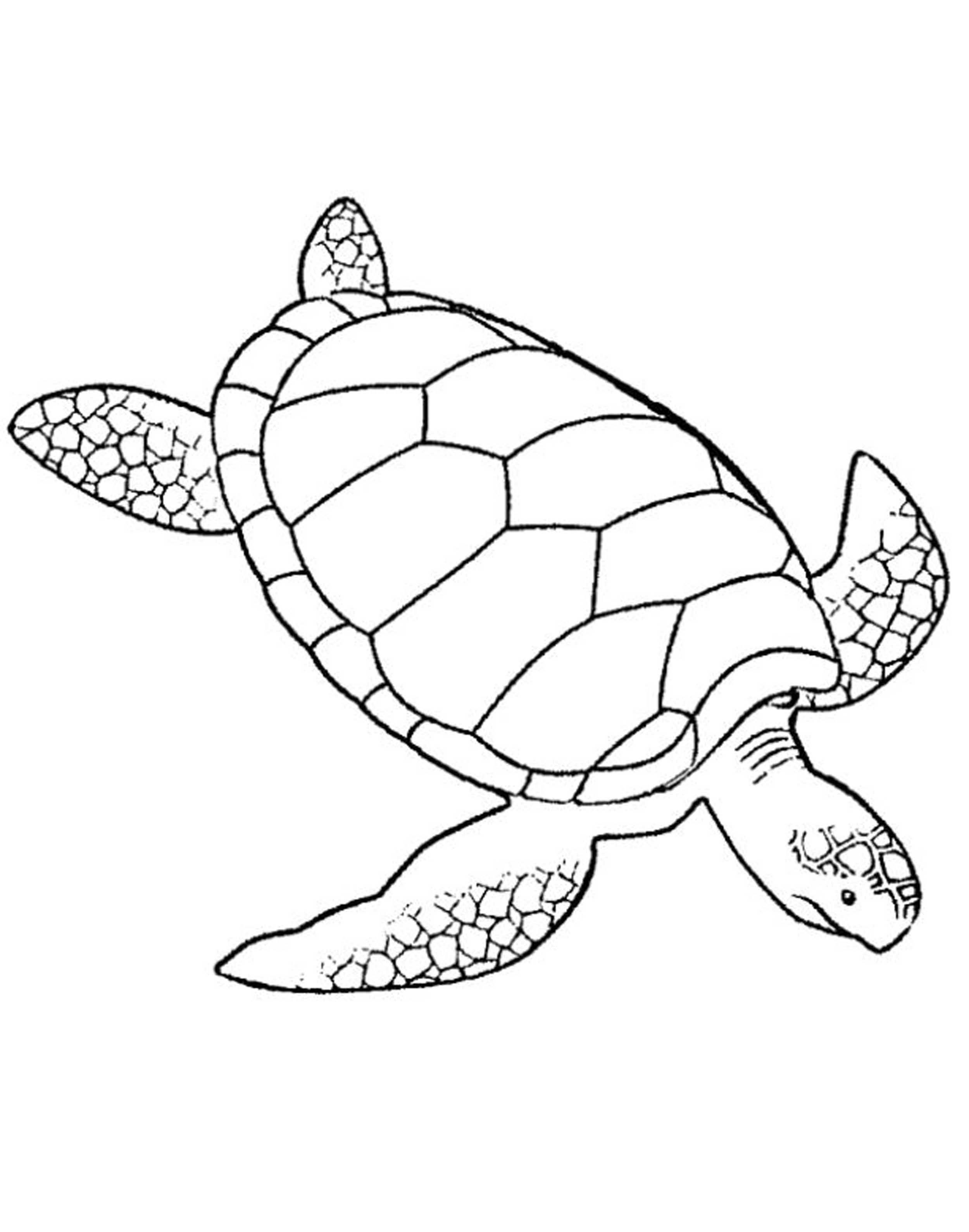 2500x3178 Inspiring Adult Coloring Pages Turtle Pics For Style And Ideas