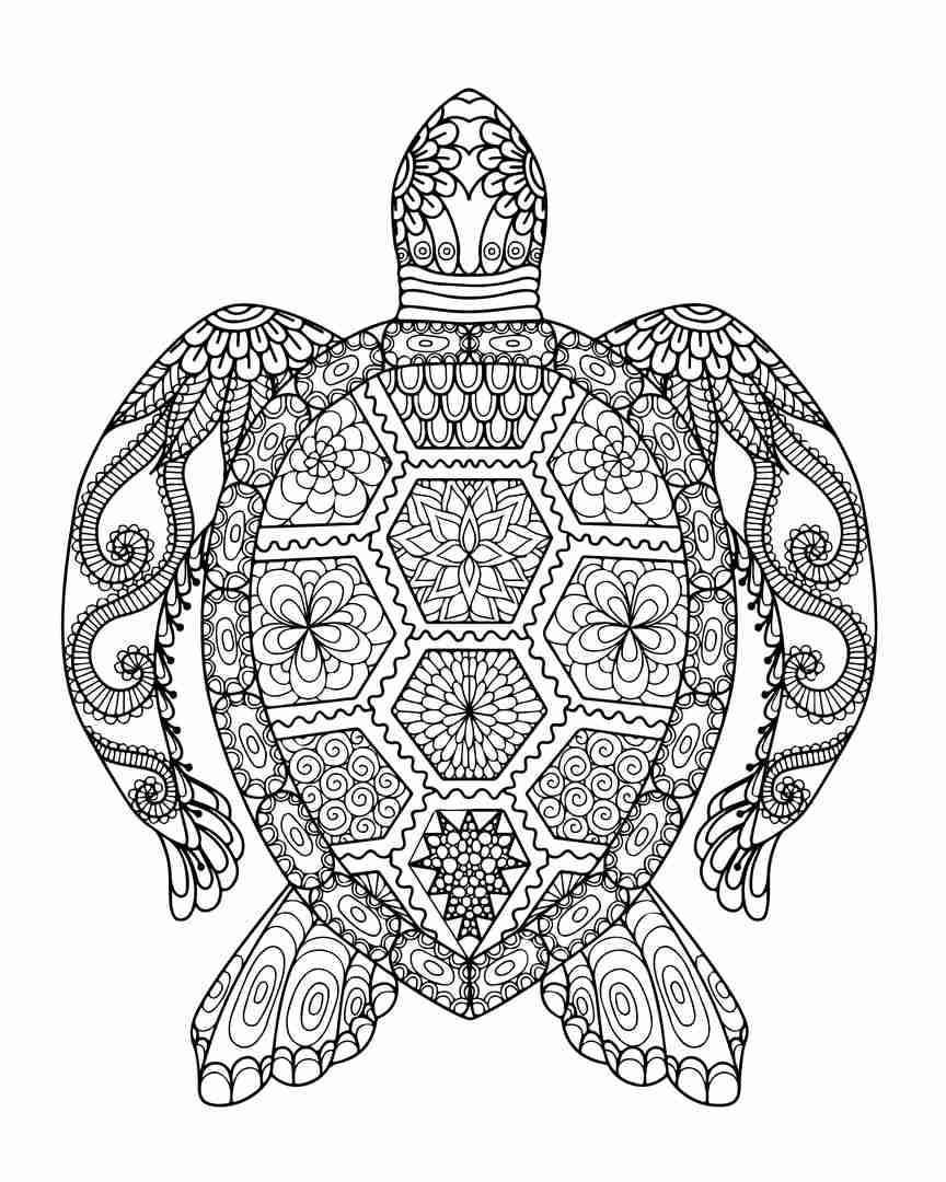 864x1080 Turtle Adult Coloring Pages