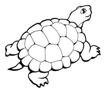 350x296 Turtle Coloring Pages For Adult Coloring Pages