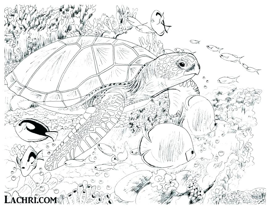 878x679 Underwater Coloring Page Adult Coloring Pages Turtle Underwater