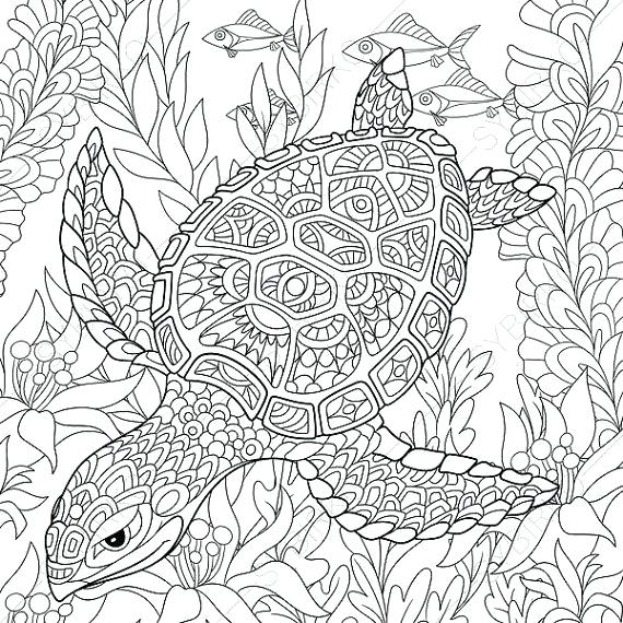 570x570 Coloring Pages Turtle
