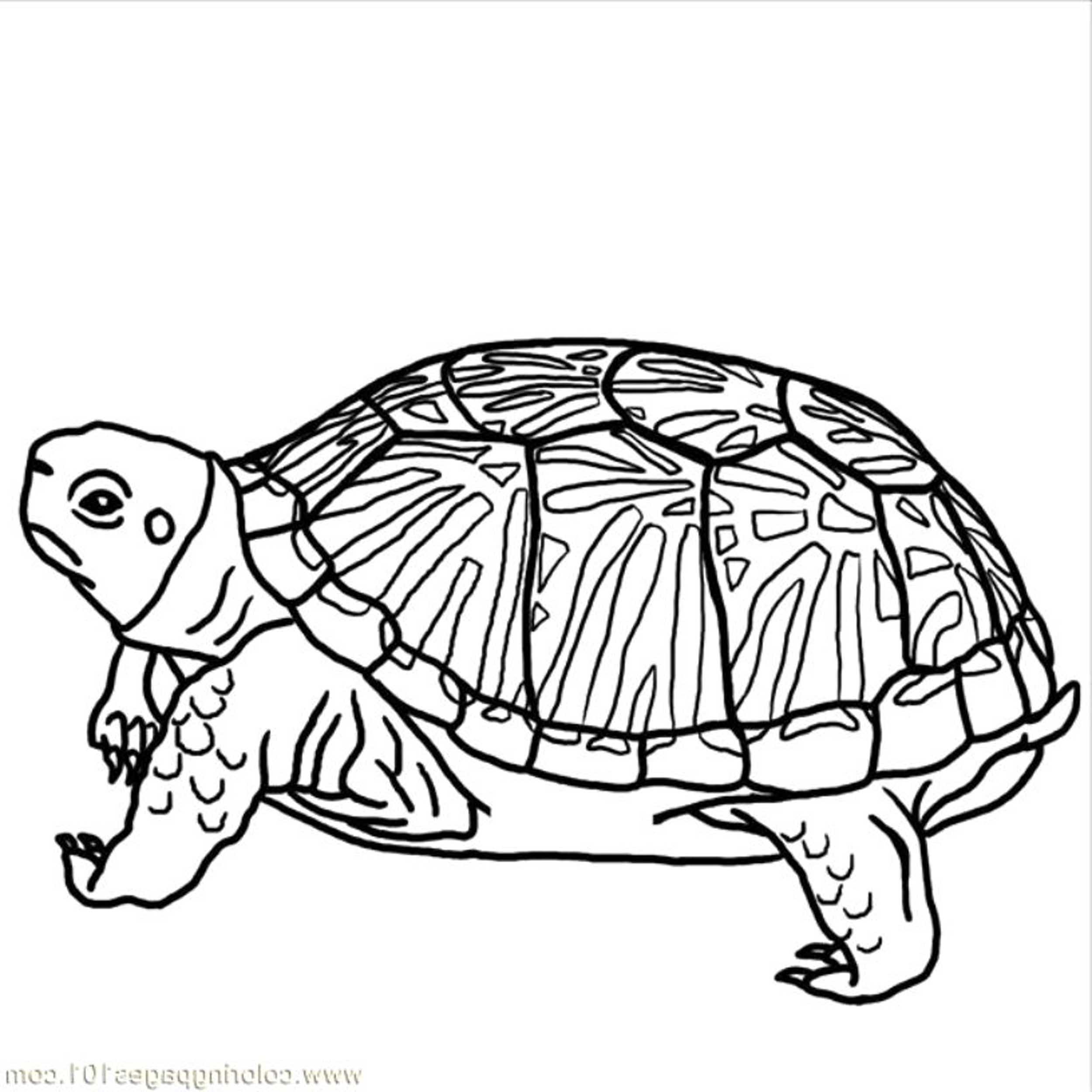 2500x2500 Adult Coloring Pages Turtle Coloring Page Of Turtle